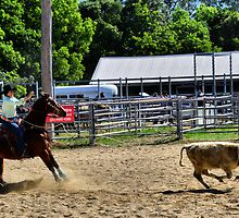 Lasso Lady - Stroud Rodeo NSW Australia by Phil Woodman