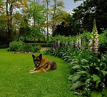Toby In The Garden by Gabrielle  Lees
