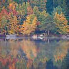 Dock on Elm Lake by Imagery