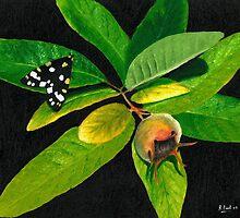 The Moth And The Medlar by Richard Paul