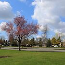 Beautiful spring park photography in Surrey, BC, Canada.  With pink cherry blossoming trees, green grasses, blue sky and white clouds. by naturematters