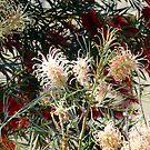Australian Spring by simonescott