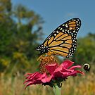 Monarch and Bee by Corinne Noon
