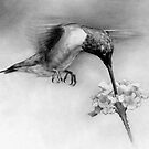 Hummingbird by Matthew Hennen