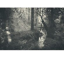 In This Silence Photographic Print