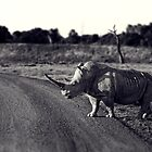 Rhino by Andrew Holford