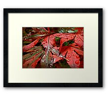 Touch Me In The Rain Framed Print