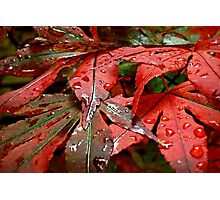 Touch Me In The Rain Photographic Print