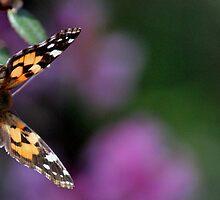 Butterfly at Burnie rhodo garden #284 by gaylene