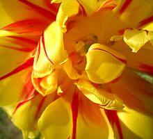 Tulip Macro # 8 by Vitta