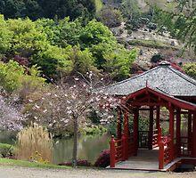 Japanese garden - at Burnie rhodo garden    by gaylene