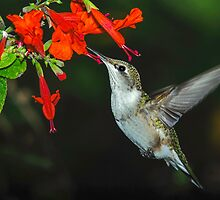 Birds, Blooms and Nature by Janice Carter