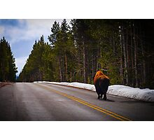 Buffalo  Photographic Print