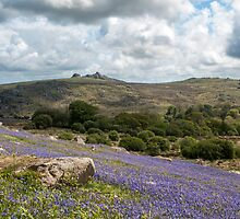 Holwell Bluebell Lawns Dartmoor by Nick Jenkins