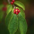 Berry Flower by Beth Mason