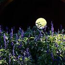 Moon Rising  by Joanne  Bradley