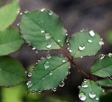 Dew Drops In The Morning IV by missmaestro123