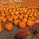 It's A Sea of Pumpkins by Jane Neill-Hancock
