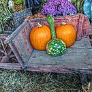 Winter Squash at the Farmers Market by Jane Neill-Hancock