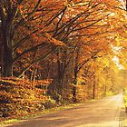 Beautiful Autumn by ienemien