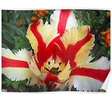 Tulip Macro # 11 Poster