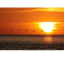Flying Home At Sunset Photographic Print