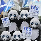 Pandas Say Yes Scotland by simpsonvisuals