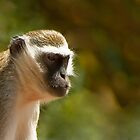 Monkey Business by DavidsArt