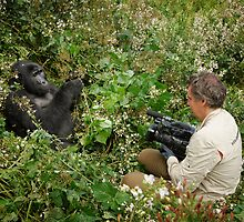 tourist is filming a mountain gorilla by travel4pictures