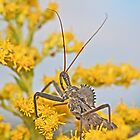 Wheel Bug - Reduviid - Arilus cristatus by MotherNature