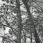 Springtime Woods - New Jesey Pine Barrens - Black and White by MotherNature2