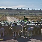 Sheep Crossing II by yolanda