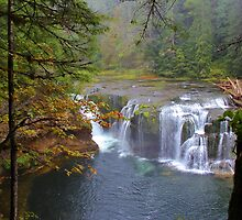 Lower Lewis Falls, Gifford Pinchot Forest, Washington by Patricia Shriver