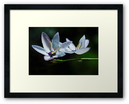 Little flower Blue by Clare Colins