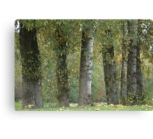 Everglades Fall Canvas Print
