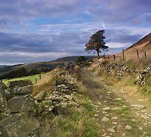 Lancashire - A View  by Carl Gaynor