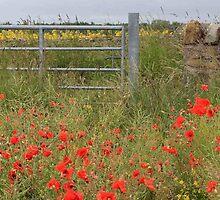 Field of Poppies by Pat Millar