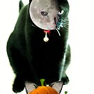 How Cats Do Halloween by Ladymoose
