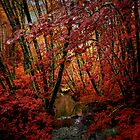 A I To Bold ~ Fall Colors ~ by Charles & Patricia   Harkins ~ Picture Oregon
