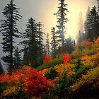 Peace Of Mind ~ Fall Colors ~ by Charles & Patricia   Harkins ~ Picture Oregon