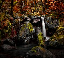 I Get Off Here ~ Fall Colors ~ by Charles & Patricia   Harkins ~ Picture Oregon