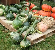 ~ Gourds? Or are they Aliens? Your Guess! ~ by Nadya Johnson