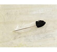 realistic painting of a magpie feather Photographic Print