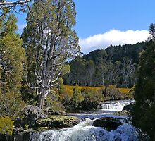Waterfall, Enchanted Walk, Cradle Mountain N.P., Tasmania by Margaret  Hyde