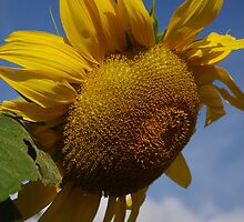 A Bright Spot on a Dull Day by Larry Llewellyn