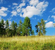 Trees with Cumulus Fractus 1 by jojobob