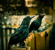Halloween Crows by StephenRphoto