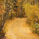 Nevada Woods by pat gamwell