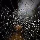 The Web by JEZ22