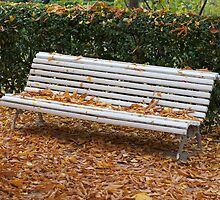 autumn bench by OHphoty